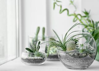 Relax: conheça 4 benefícios da decoração com plantas