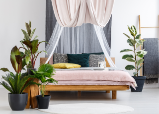 Plantas para quarto: quais ter e seus benefícios no sono