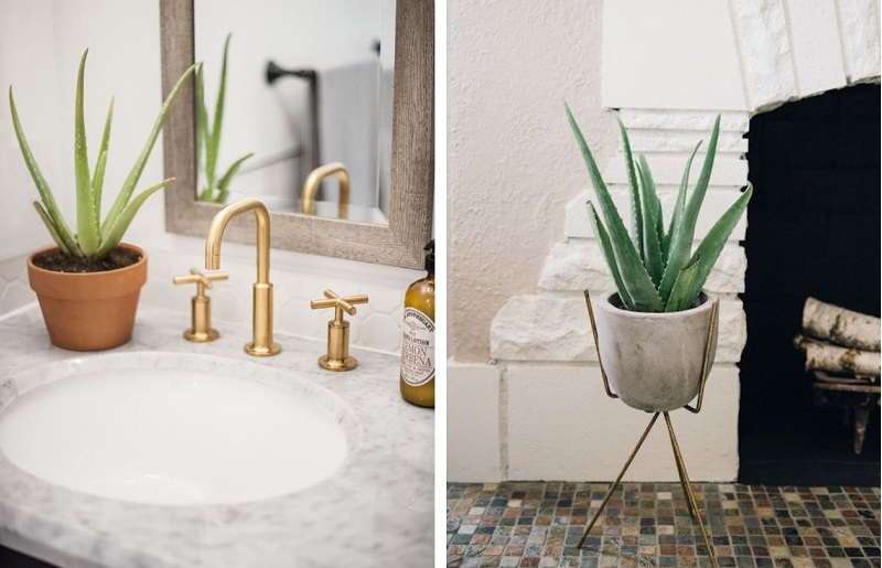 Plantas para banheiro - Aloe vera