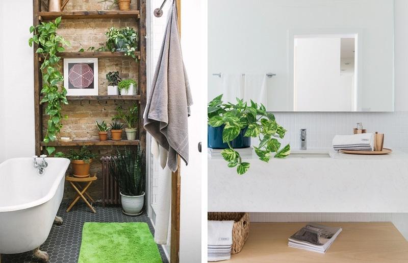 Plantas para banheiro - Jiboia