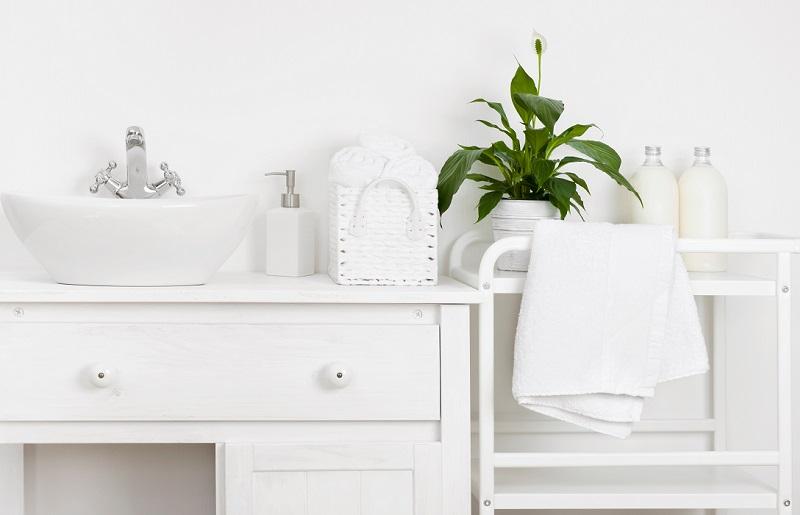 Plantas para banheiro - lírio da paz