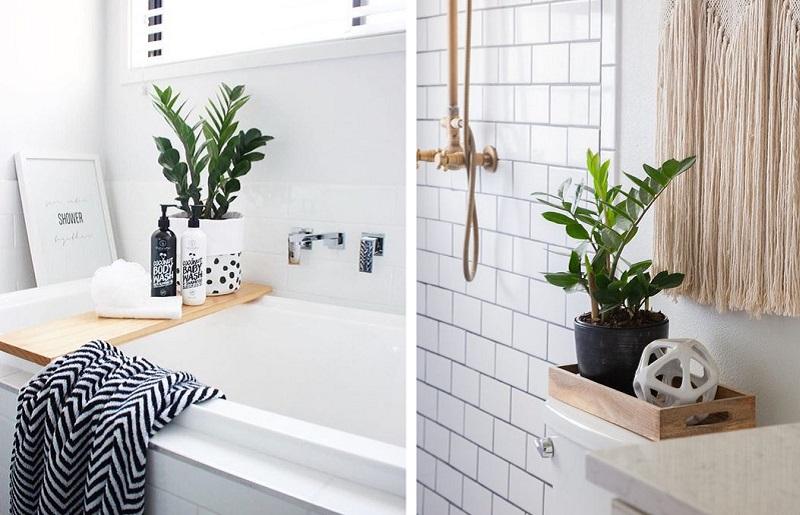 Plantas para banheiro - zamioculcas