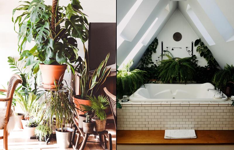Urban-Jungle-Plantasemcasa-sala-banheiro-decoração