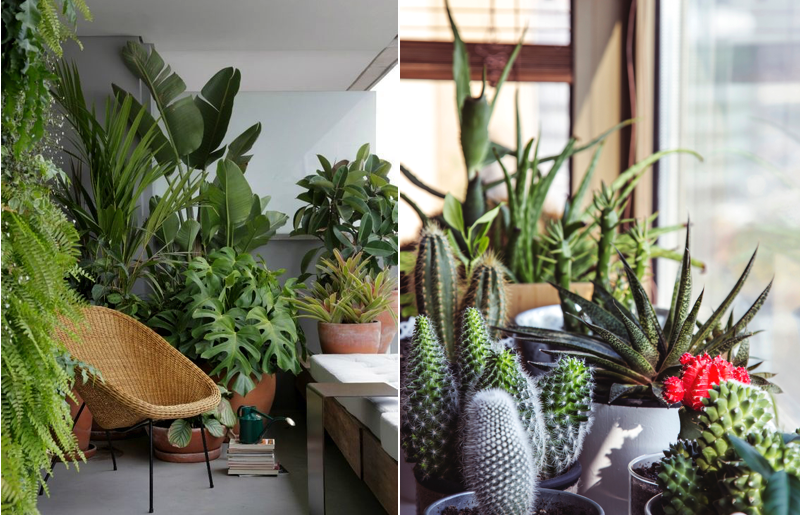urban jungle-por-onde-começar-plantas-em-casa