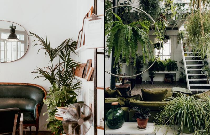urban-jungle-décor-plantas-em-casa