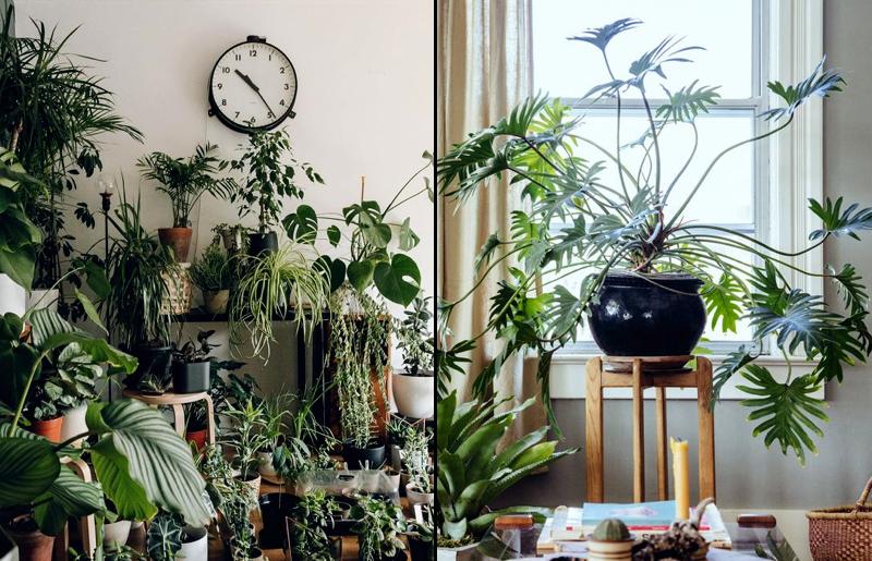 urban-jungle-materiais-naturais-plantas-na-decoração
