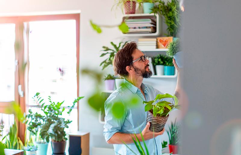 Plantas para sala diversidade