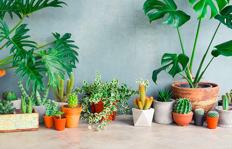 Plantas para sala tipos