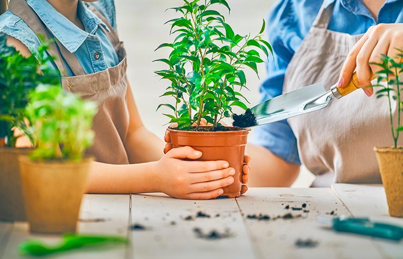 Plantas para sala cuidados